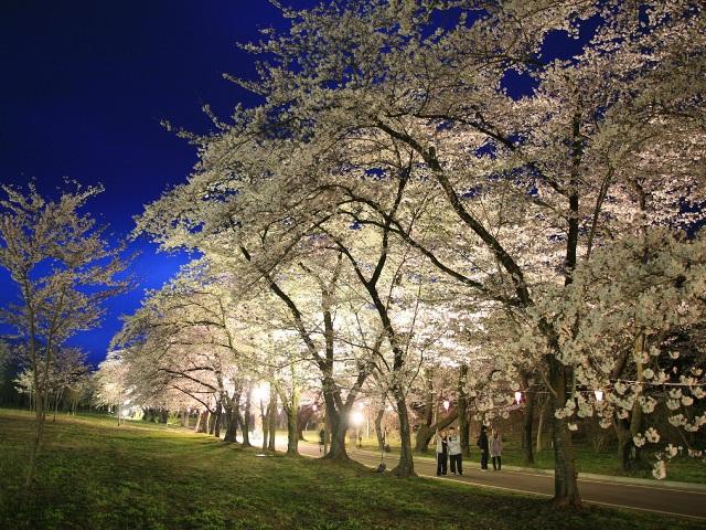 赤城南面 千本 桜まつり