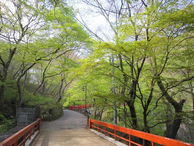 河鹿橋の新緑
