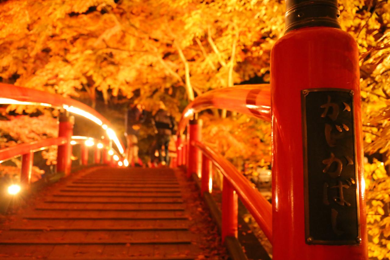 『河鹿橋紅葉ライトアップ』 10月24日〜11月19日(予定)