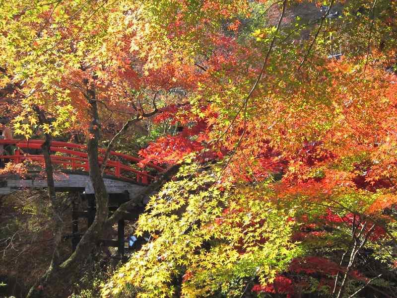 11月 6日 湯元『河鹿橋』周辺の様子