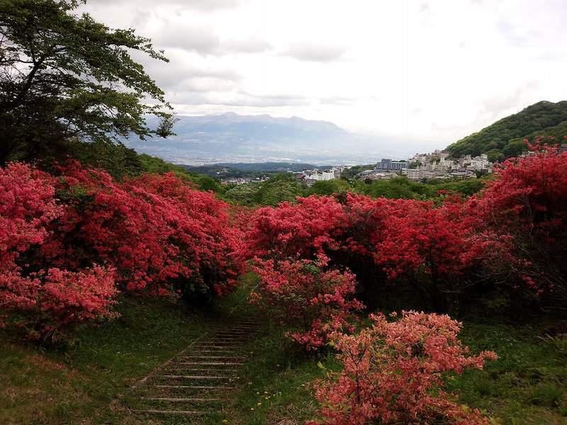 長峰公園の「ヤマツツジ」 見頃を迎えました! 5月10日の様子