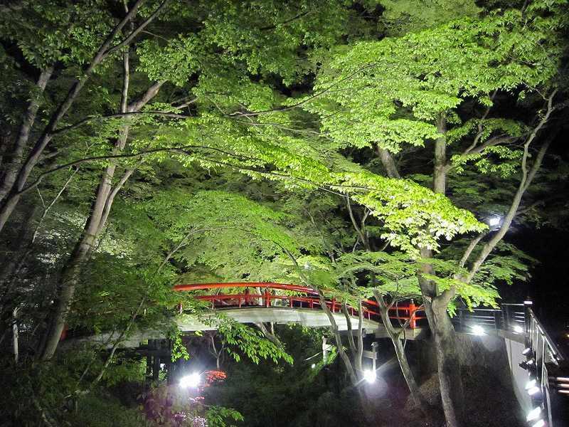 湯元『河鹿橋』の「新緑ライトアップ」が始まりました!