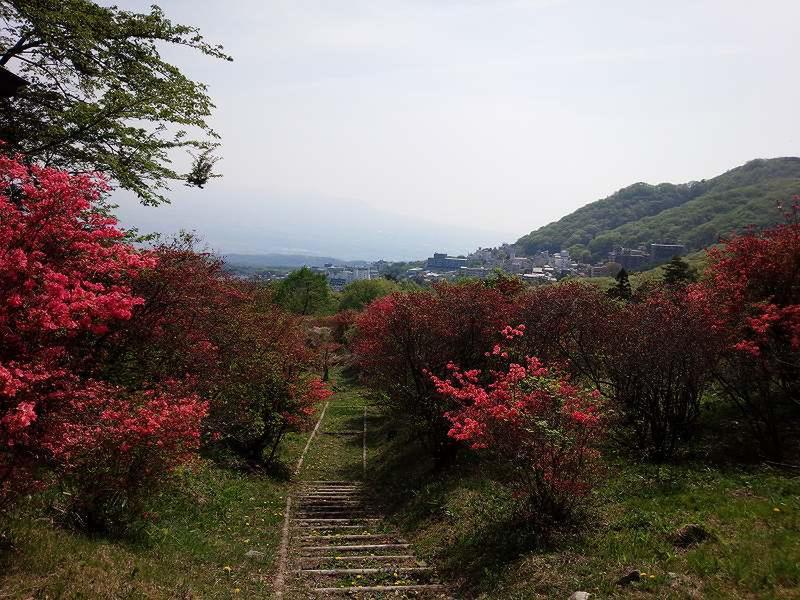 長峰公園「ヤマツツジのじゅうたん」準備中! 5月1日の様子